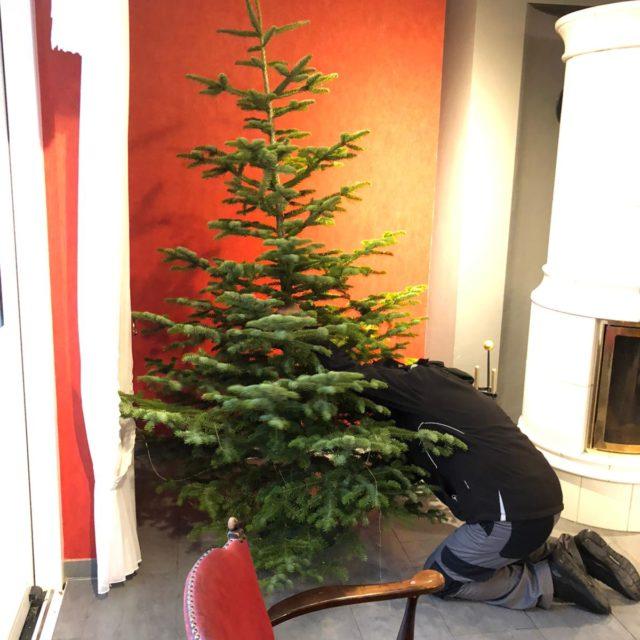 Der Weihnachtsbaum wird im Roten Salon, Landhaus aufgestellt (7. Dezember 2020)